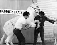 Farrier Training